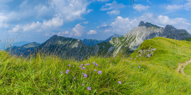 Germany- Bavaria- Allgaeu- Allgaeu Alps- Armeria alpina flowers- panoramic view