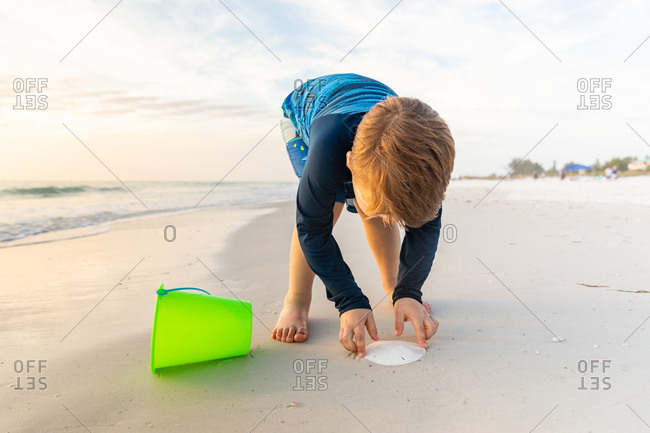 Young Boy Carefully Picking Up Sand Dollar at the Beach