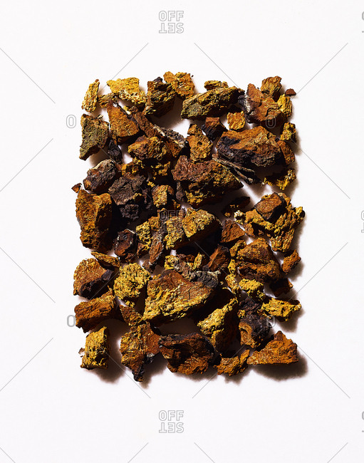 Chaga mushrooms on white background