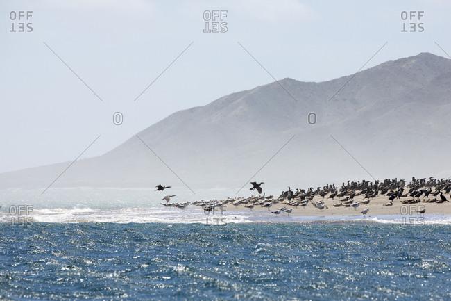 Birds on a beach in Baja California