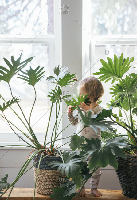 Toddler girl standing in house plants in front of window