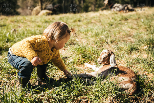 Toddler girl leaning over a baby goat.