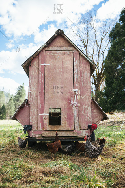 Chicken tractor on a farm.