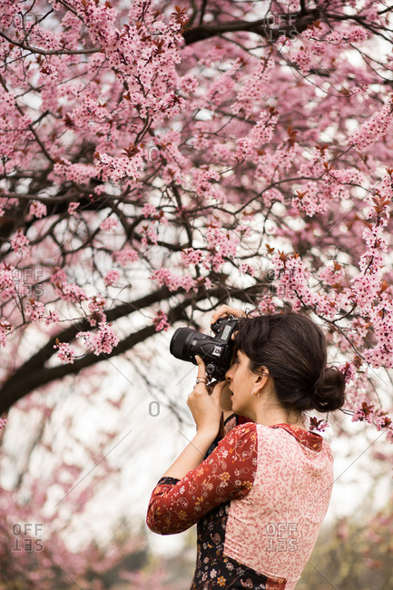 Woman takes photo of cherry blossoms