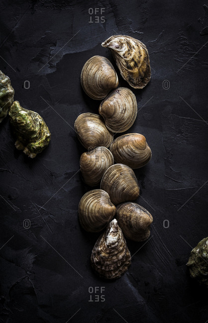 Oysters and clams on dark background