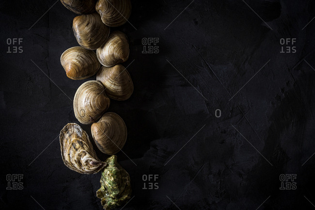 Oysters and clams on a black background