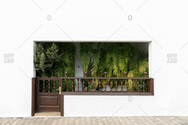 Fresh leaves of tropical green plants decorating terrace of clean white building