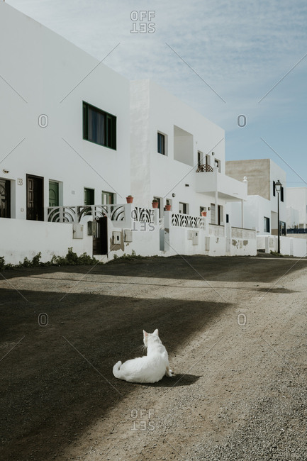 White cat lying on ground