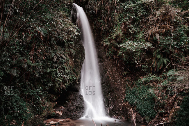 Stream of fresh cold water falling from cliff near green shrubs in majestic nature