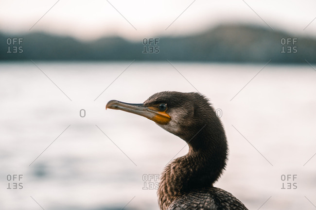 Back view of wild bird near coast with green trees and water surface on blurred background