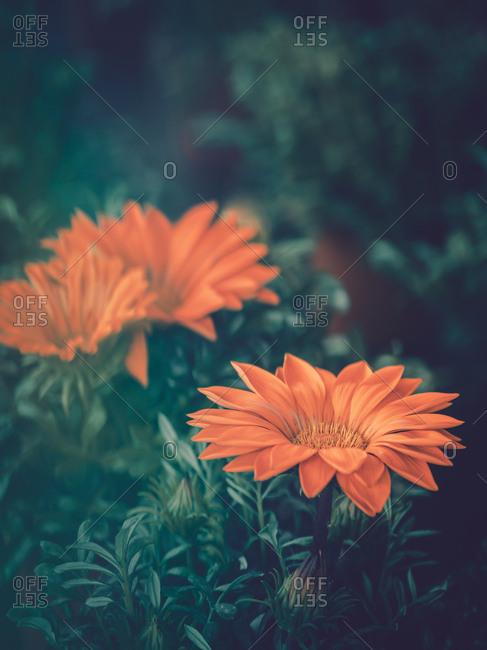 Pretty flower growing in garden
