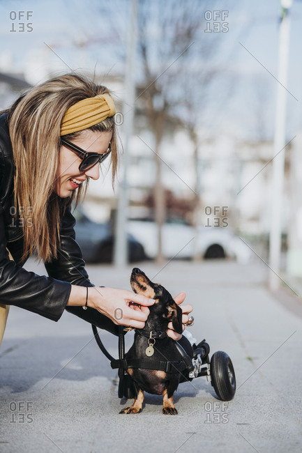 Happy woman in sunglasses stroking paralyzed handicapped Dachshund dog with wheelchair on street