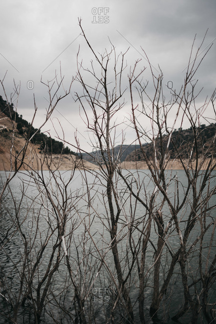 Branches of leafless bush near calm water of lake against gray cloudy sky in wonderful countryside