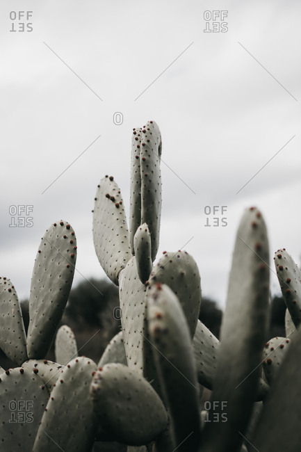 Closeup wonderful green cactus with tiny prickly thorns in countryside