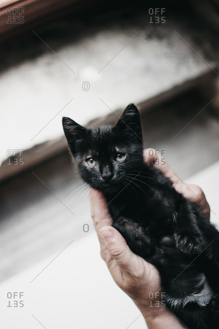 Crop hands holding black kitten