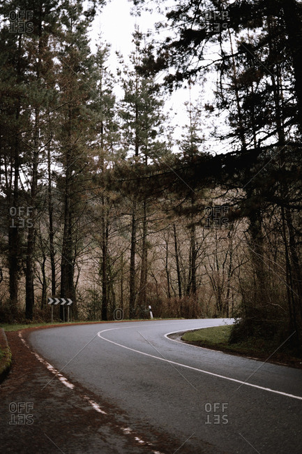 Narrow asphalt road going through wonderful forest with conifer trees in majestic countryside