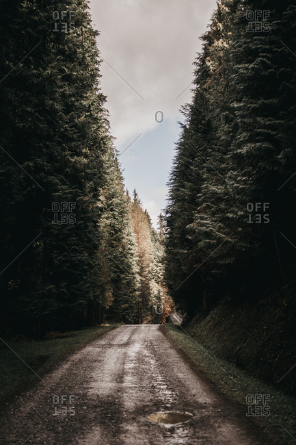 Wonderful forest with conifer trees in majestic countryside rough narrow road