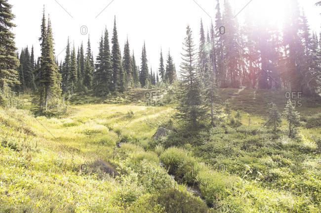 Canada, British Columbia, Garibaldi Provincial Park, Panorama Ridge