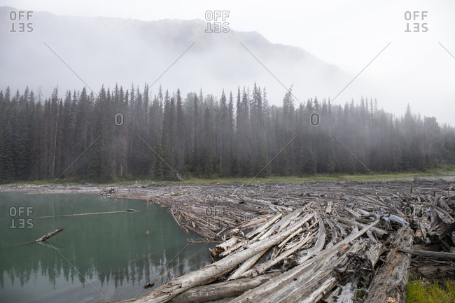 Canada, British Columbia, driftwood on Duffey Lake