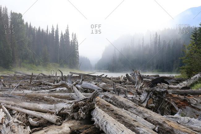 Canada, British Columbia, driftwood on Duffey Lake