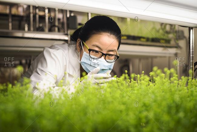 Asian scientist examining plants in laboratory, Philadelphia, Pennsylvania, USA