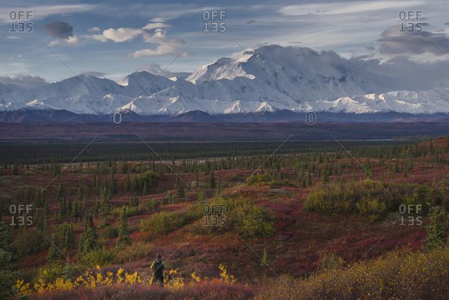 Asian hiker admiring scenic view of mountain range, Denali, AK, USA