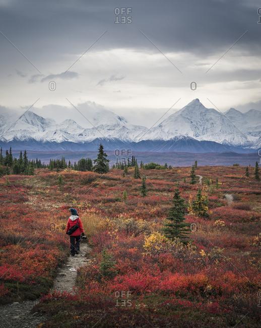 Asian woman hiking near mountains, Denali, AK, USA