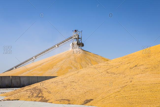 Harvested corn being stockpiled at grain elevator; Rake, Iowa, United States of America