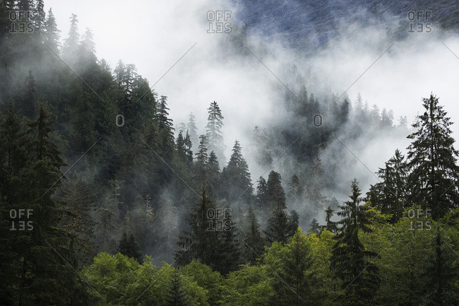 Scenic views of the Great Bear Rainforest with mist and low cloud; Hartley Bay, British Columbia, Canada