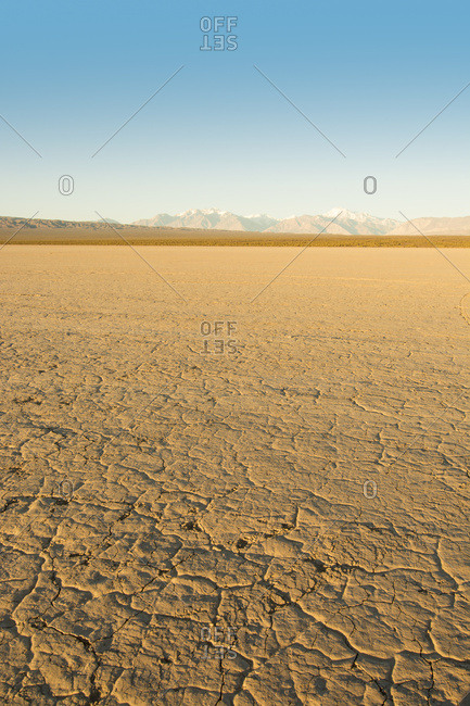 Vertical image of a dry mud-caked lake bed with snow-capped mountains in the distance at dawn; Barreal, San Juan, Argentina