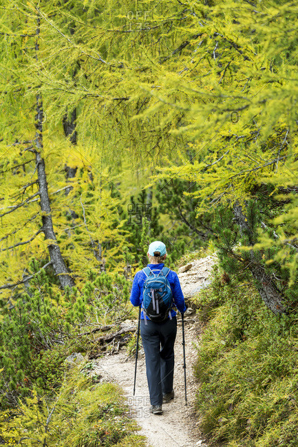Female hiker along alpine trail with autumn colours; Sesto, Bolzano, Italy