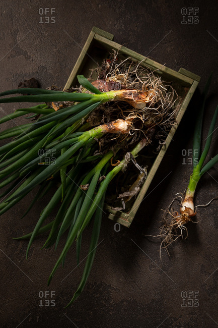 Onions in crate from above