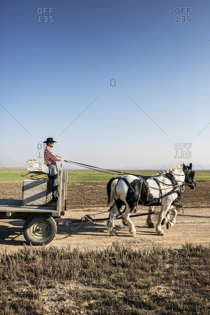 USA, Nevada, Wells, - September 20, 2014:  Cowboy and wrangler Clay Nannini leads a Horse-Drawn Wagon Ride at Mustang Monument, A sustainable luxury eco friendly resort and preserve for wild horses, Saving America's Mustangs Foundation