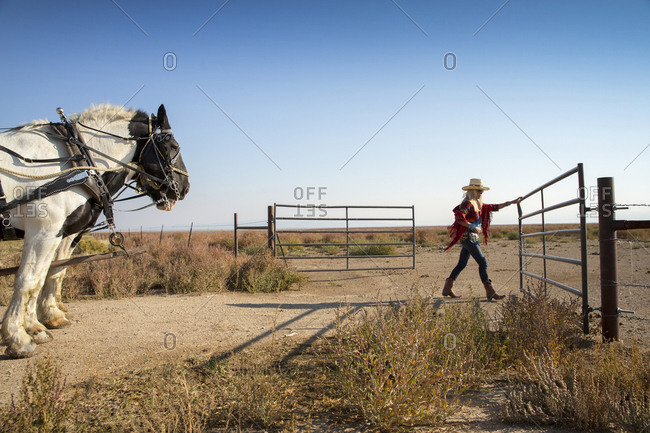 USA, Nevada, Wells, - September 20, 2014:  guests can participate in Horse-Drawn Wagon Rides during their stay at Mustang Monument, A sustainable luxury eco friendly resort and preserve for wild horses, Saving America's Mustangs Foundation