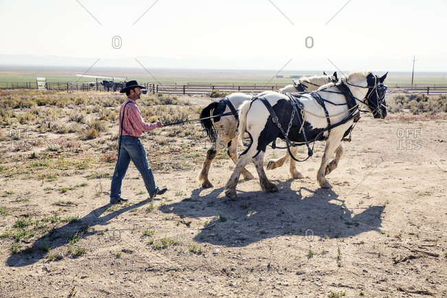 USA, Nevada, Wells, - September 20, 2014:  cowboy and wrangler Clay Nannini prepares for a Horse-Drawn Wagon Ride at Mustang Monument, A sustainable luxury eco friendly resort and preserve for wild horses, Saving America's Mustangs Foundation