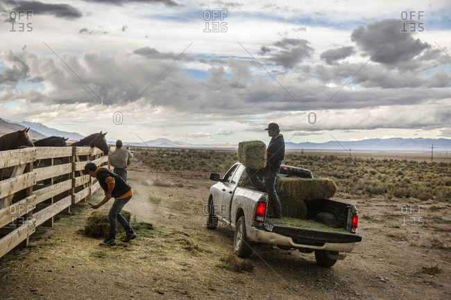 USA, Nevada, Wells, - September 21, 2014:  cowboy and wrangler Clay Nannini takes care of the horses on the expansive 900 square mile property in NE Nevada, Mustang Monument, A sustainable luxury eco friendly resort and preserve for wild horses, Saving America's Mustangs Foundation