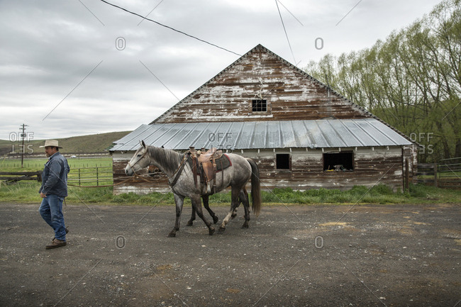 USA, Oregon,  - May 15, 2015: Enterprise, Cowboy and Rancher Todd Nash gets ready to load horses into a trailer for a cattle drive at the Snyder Ranch in Northeast Oregon