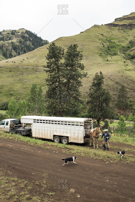 USA, Oregon, Joseph,  - May 15, 2015: Cowboys Todd Nash and Cody Ross prepare for a cattle drive up Big Sheep Creek