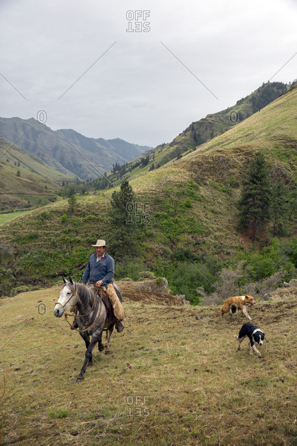 USA, Oregon, Joseph,  - May 15, 2015: Cowboy Todd Nash searches for his cattle up the Wild Horse Drainage above Big Sheep Creek