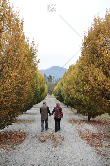 USA, Oregon, Medford, - November 2, 2012:  Cal and Judy Schmidt stand among the trees on their farm, Schmidt Family Vineyards is located in the beautiful Applegate Valley and is owned by Judy and Cal Schmidt, the winery consists of country charm, beautiful gardens and fine wines