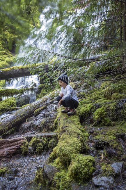 USA, Oregon, Oregon Cascades,  - September 28, 2014: a young boy hikes and checks out the upper Proxy Falls in the Wilamette National Forest in the early Fall, McKenzie Pass