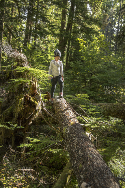 USA, Oregon, Oregon Cascades,  - September 28, 2014: young boy plays in the in the Wilamette National Forest in the early Fall on the hike to Proxy Falls