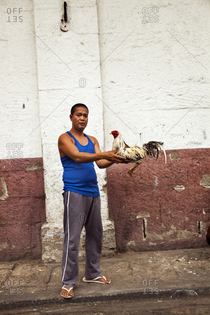 PHILIPPINES, Manila,  - February 5, 2011: portrait of a man with his cock fighting rooster in the Intramros District on Beatero Street