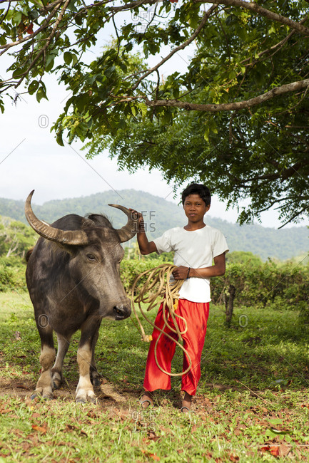 PHILIPPINES, Palawan, El Nido, - February 13, 2011:  farm boy with his buffalo in the town of El Nido near the airport