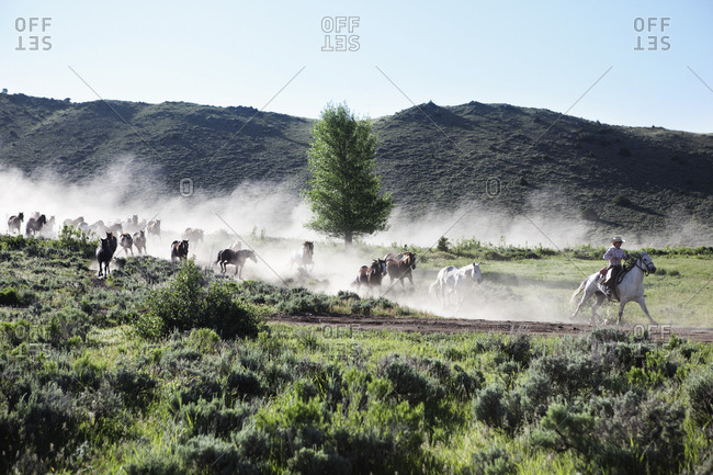 USA, Wyoming, - June 30, 2010:  Encampment, wranglers leading horses to a barn in the early morning, Abara Ranch
