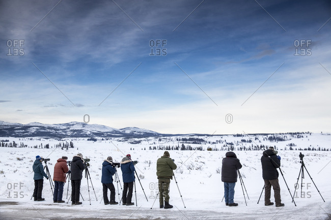USA, Wyoming, Yellowstone National Park,  - January 1, 2000: wolf-watchers line up on the side of Blacktail Plateau Drive to watch a pack, Blacktail Deer Plateau