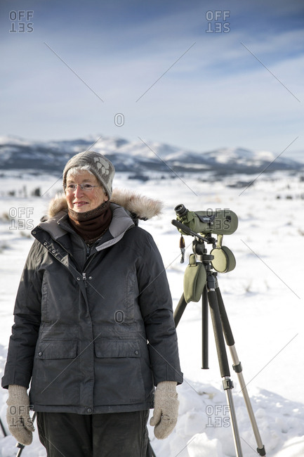 USA, Wyoming, Yellowstone National Park,  - January 1, 2000: wolf-watcher Kirsty Peake studies a wolf pack in Blacktail Deer Plateau