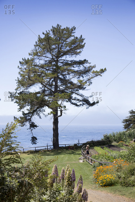 USA, California, Big Sur, Esalen,  - May 13, 2013: the Buddha Garden at the Esalen Institute