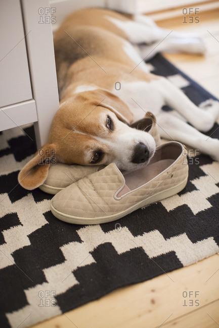 Dog lying on sleepers