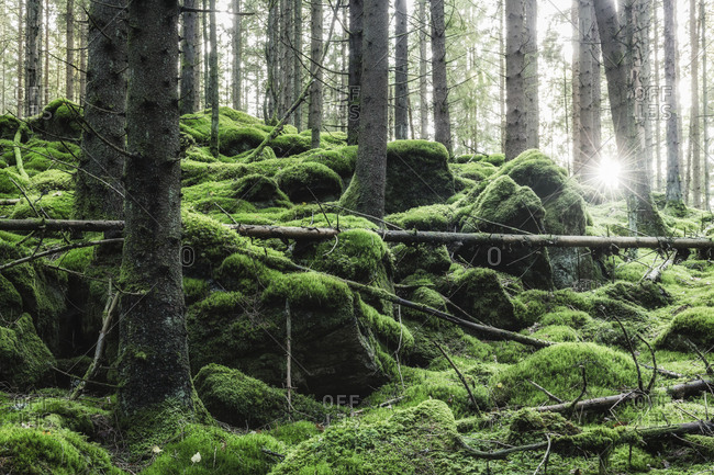 Moss in forest